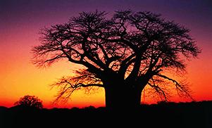 Du parc Kruger aux vignobles sud-africain