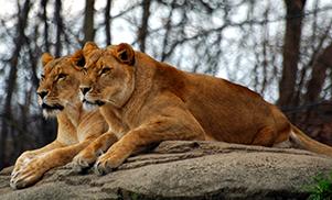 Les pistes sauvages du Kruger